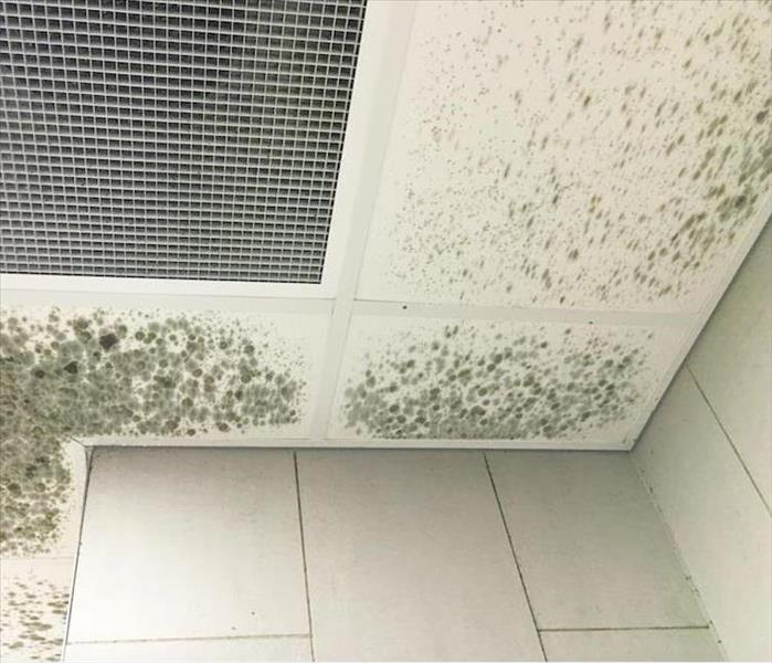 Mold Remediation Some Tips to Help Your Fayetteville Home Recover From a Mold Infestation